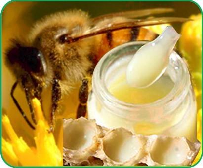 Sữa ong chúa – Giàu dưỡng chất